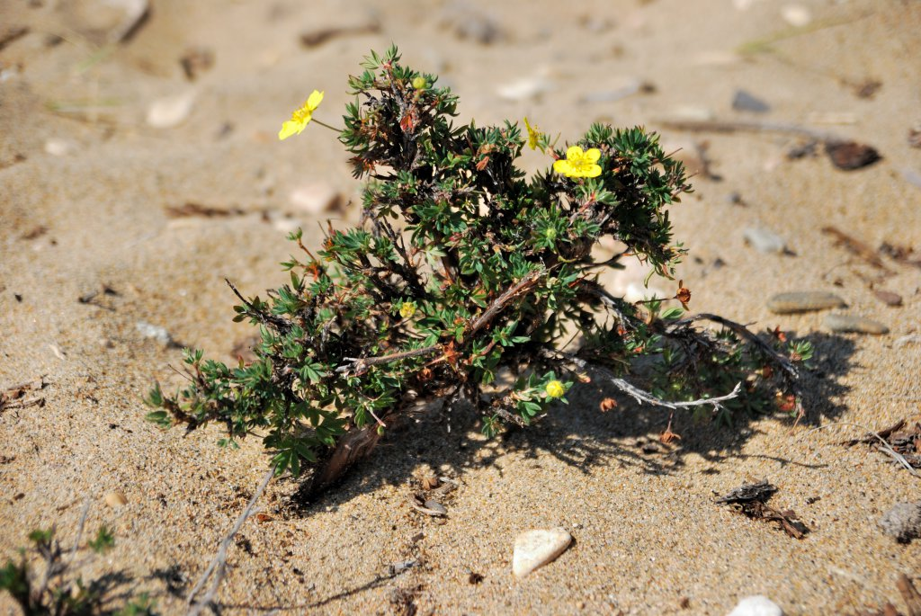 Хубсугул. Песчанный обитатель