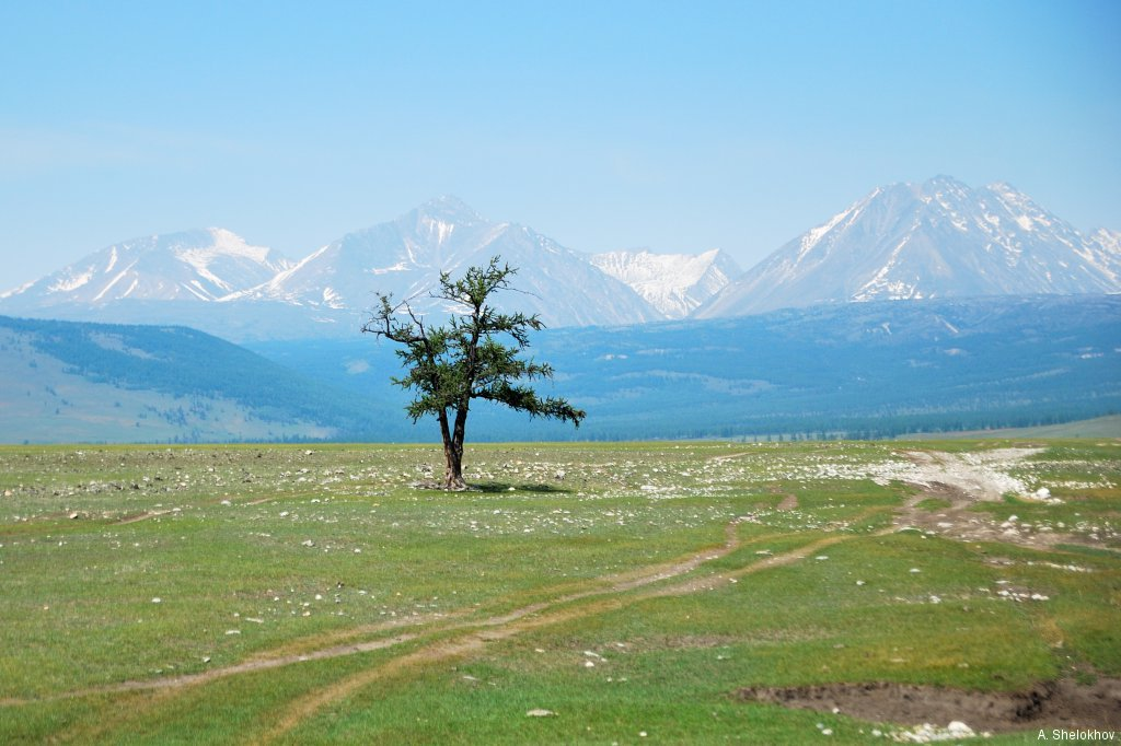 Хубсугул. Одинокое дерево