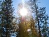 Солнце сквозь деревья