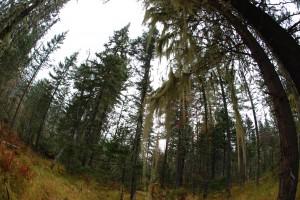 Сказочный дремучий лес