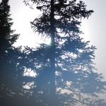 Туман под перевалом, на границе леса
